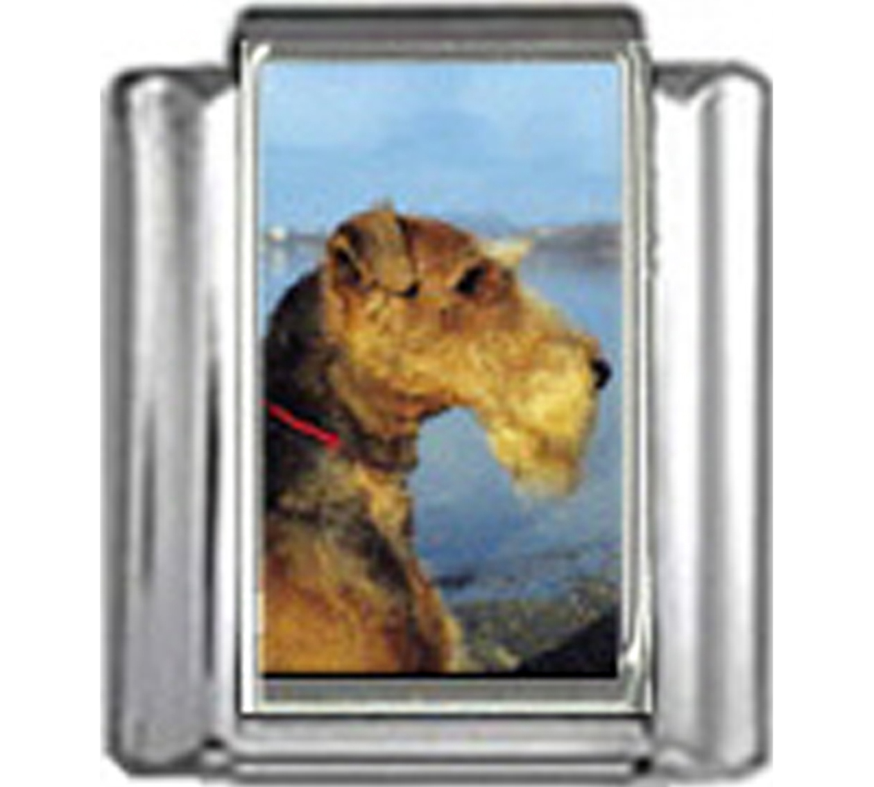 DG022-Airedale-Terrier-Dog-1
