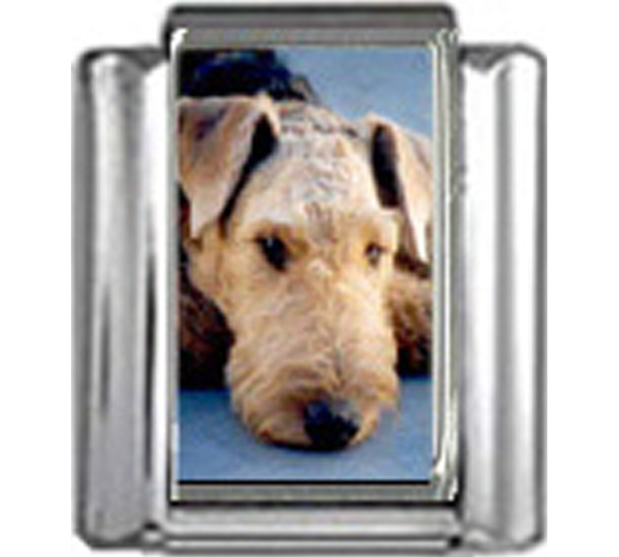DG023-Airedale-Terrier-Dog-2