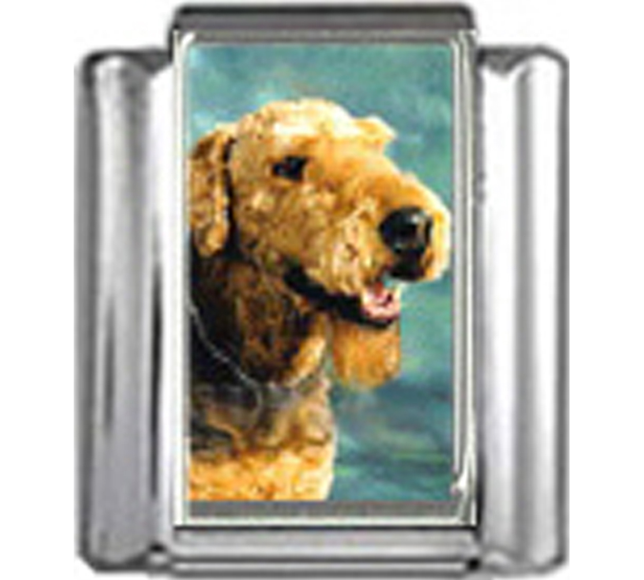 DG024-Airedale-Terrier-Dog-3