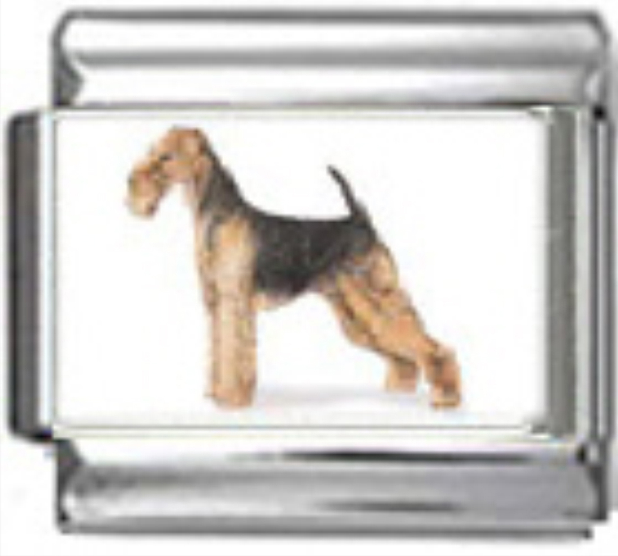 DG025-Airedale-Terrier-Dog-4
