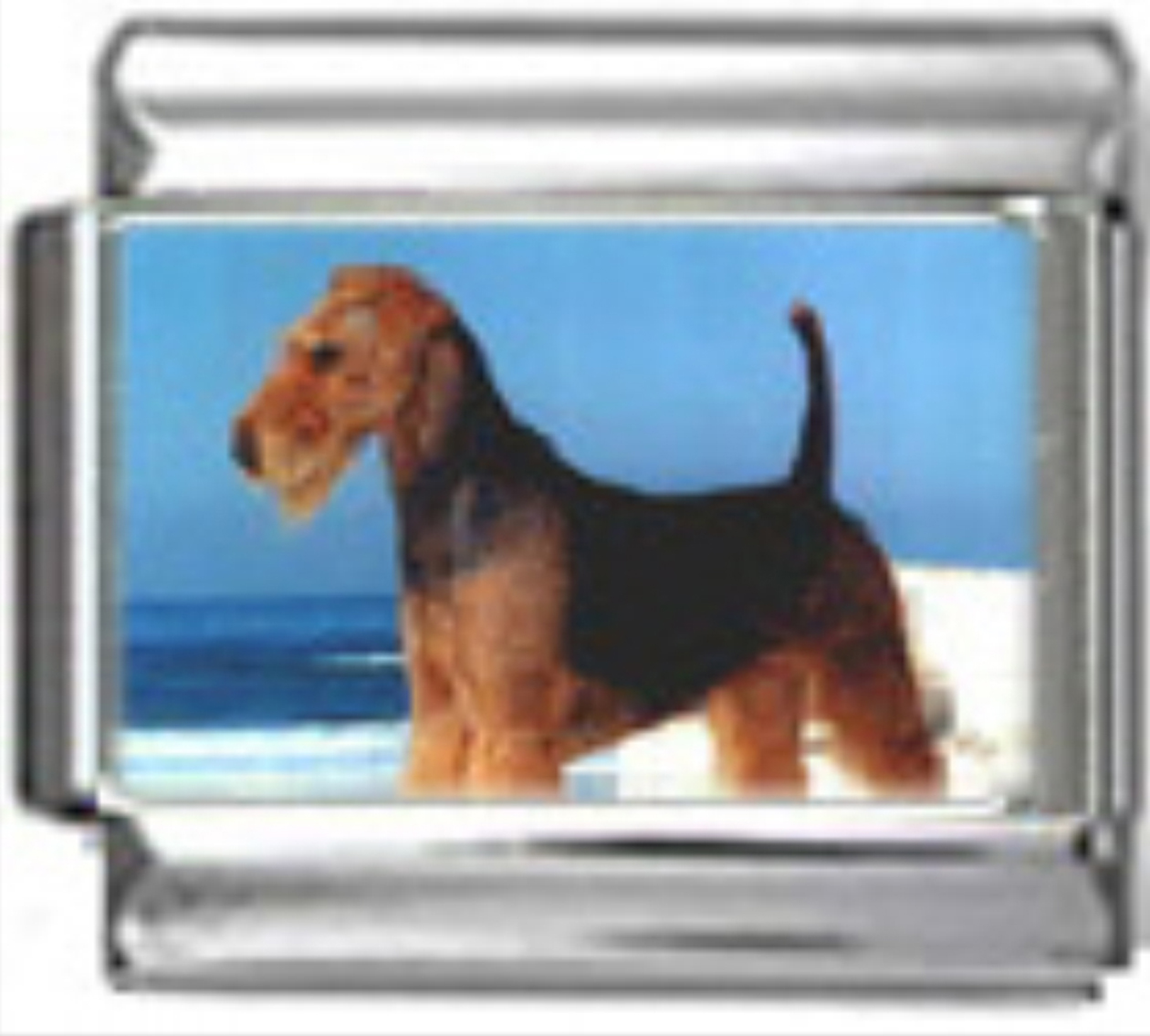 DG026-Airedale-Terrier-Dog-5