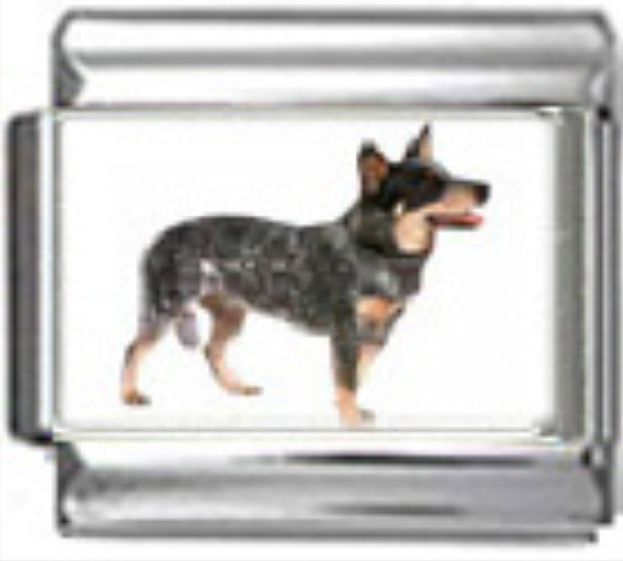 DG040-Australian-Cattle-Dog-1