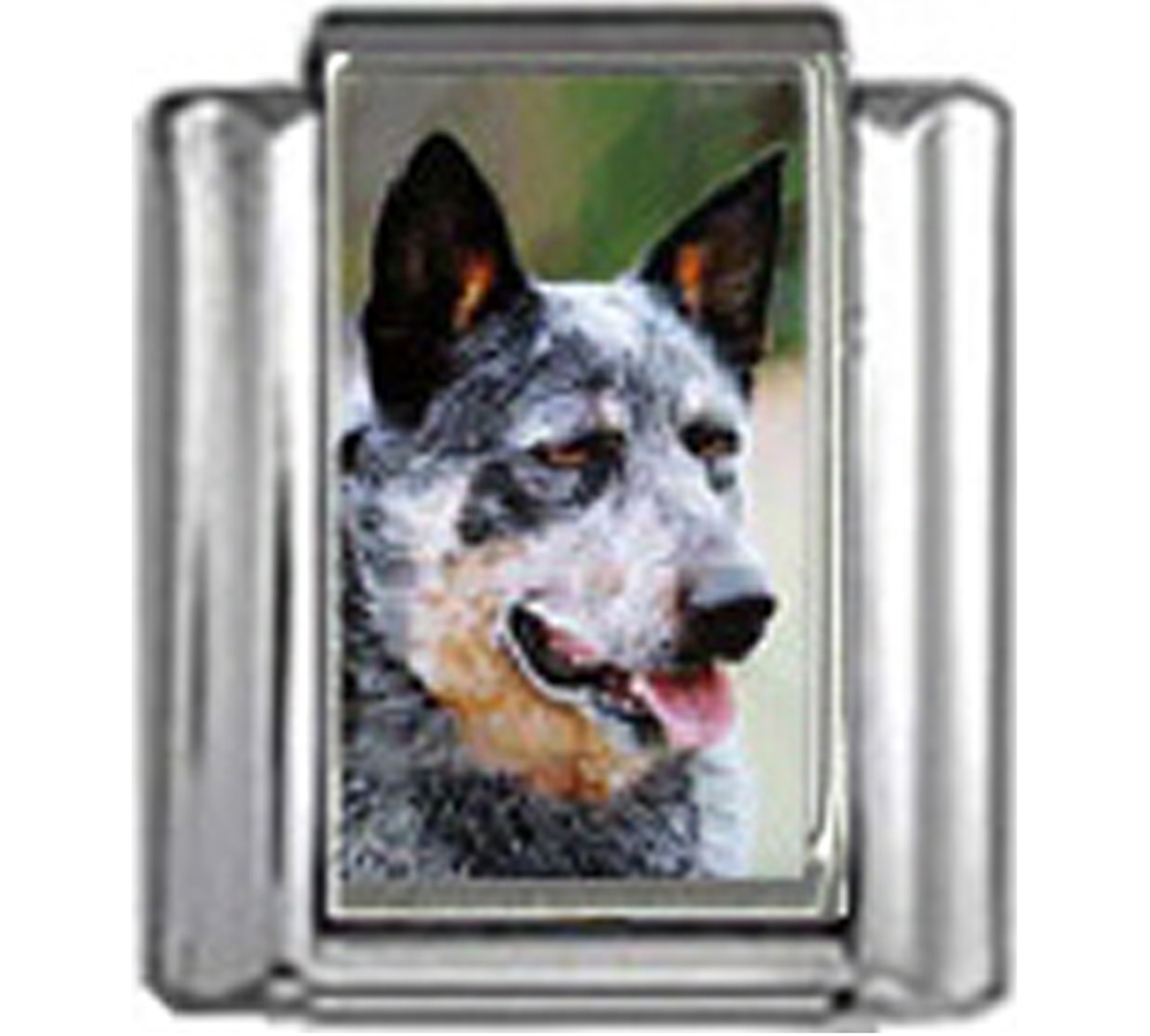 DG042-Australian-Cattle-Dog-3
