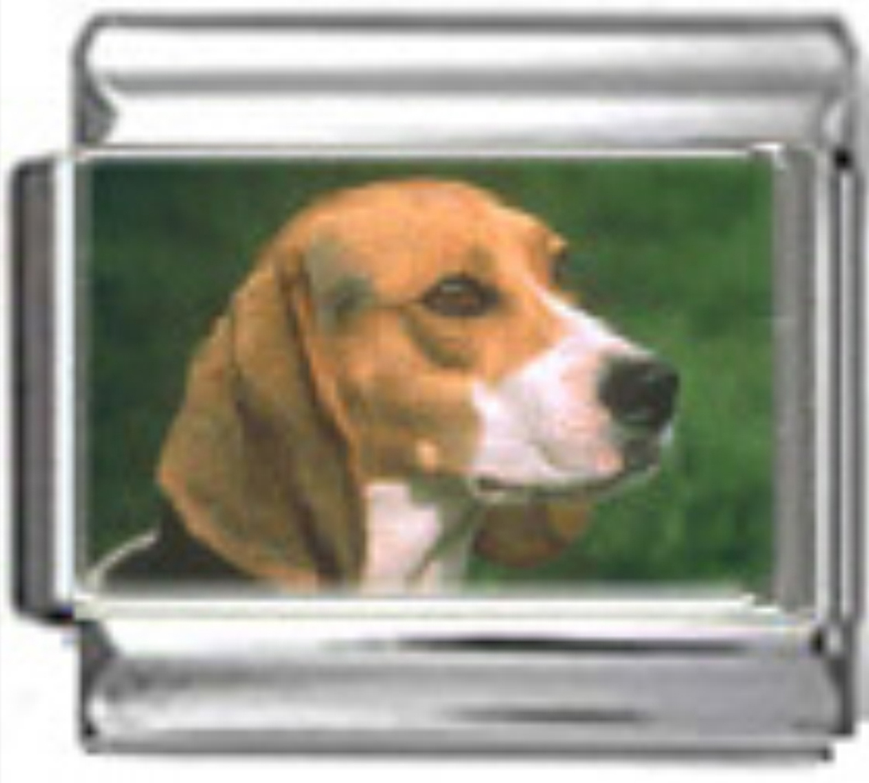 DG054-Beagle-Dog-1