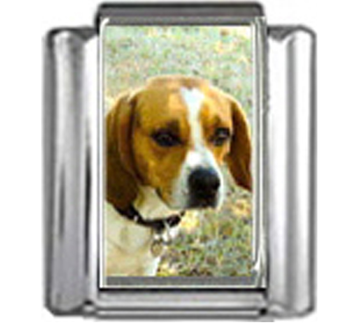 DG055-Beagle-Dog-2