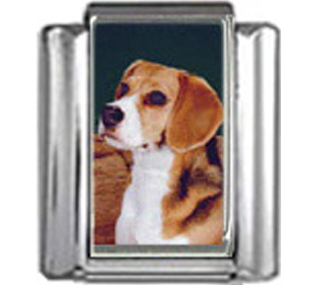 DG056-Beagle-Dog-3