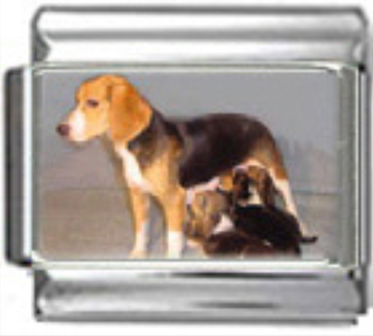 DG057-Beagle-Dog-4