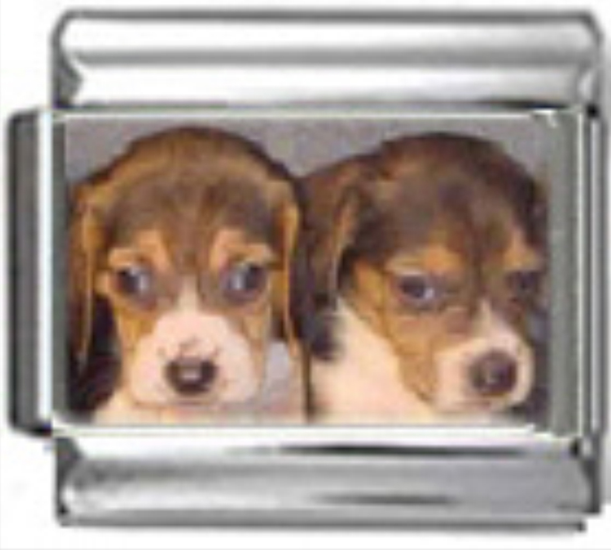 DG058-Beagle-Dog-5