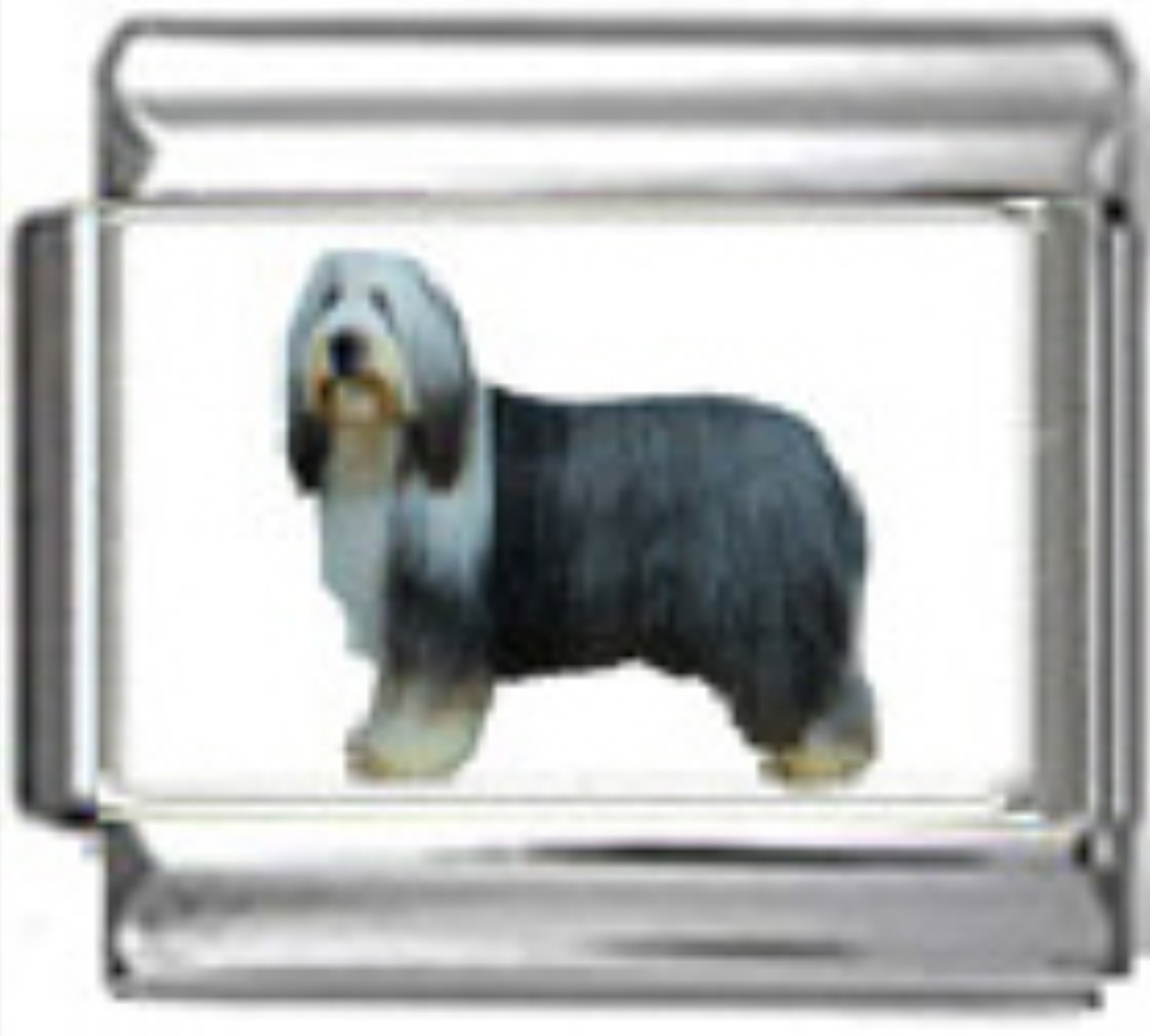 DG059-Bearded-Collie-Dog-1