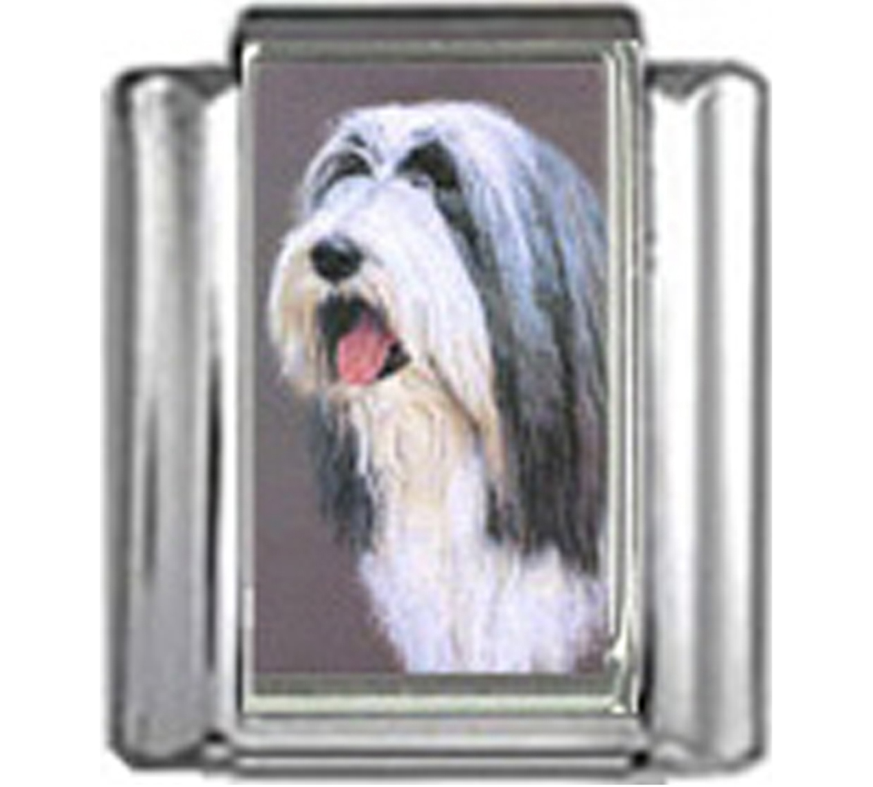 DG061-Bearded-Collie-Dog-3