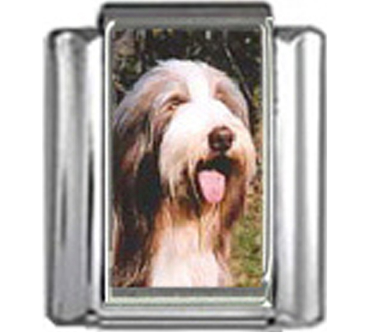 DG062-Bearded-Collie-Dog-4
