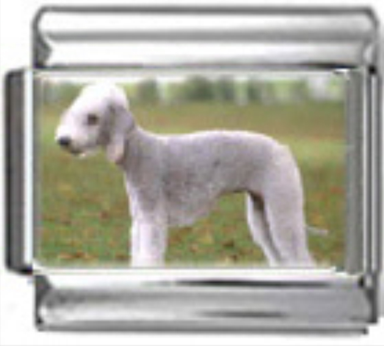 DG063-Bedlington-Terrier-Dog-1