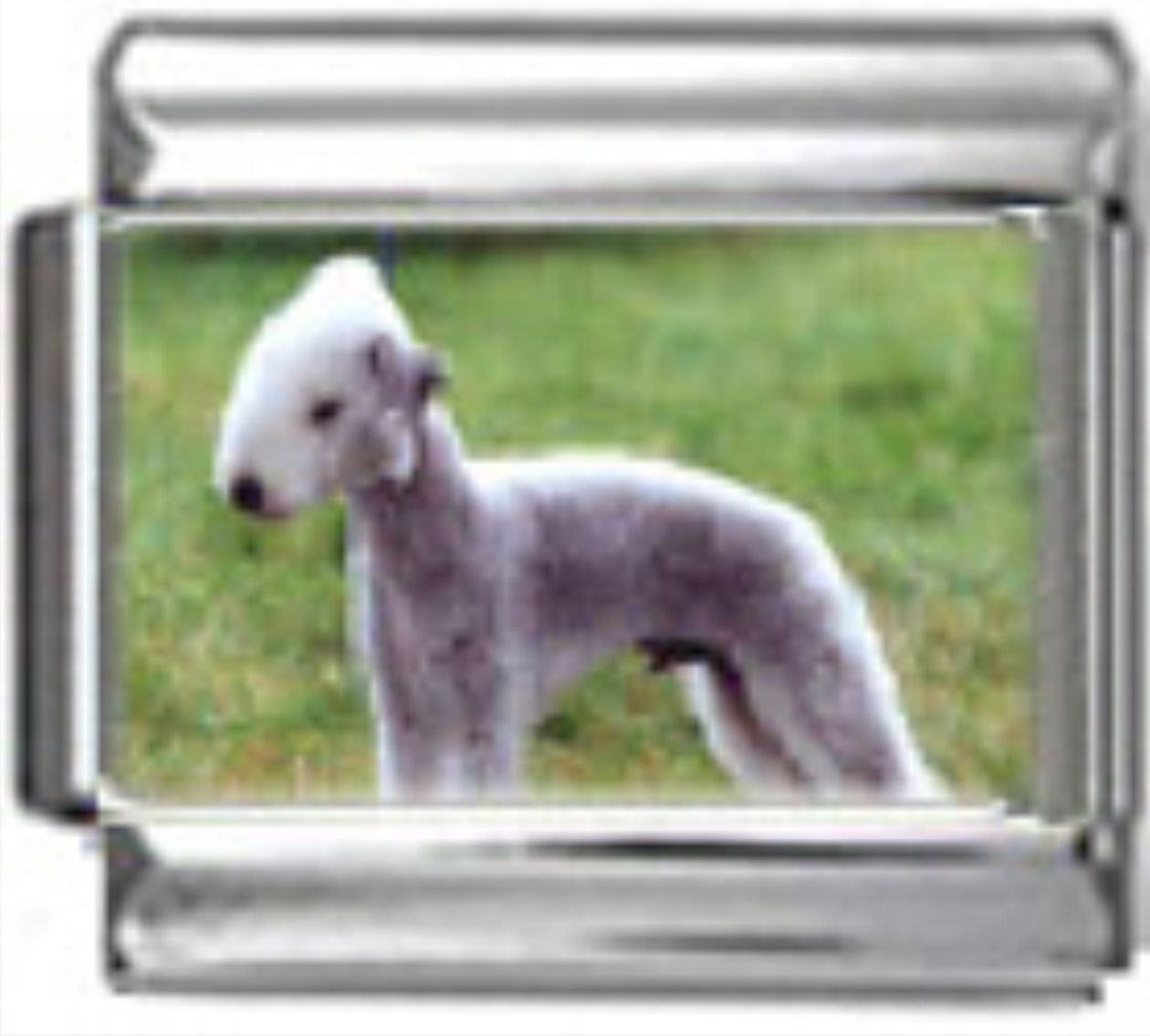 DG064-Bedlington-Terrier-Dog-2