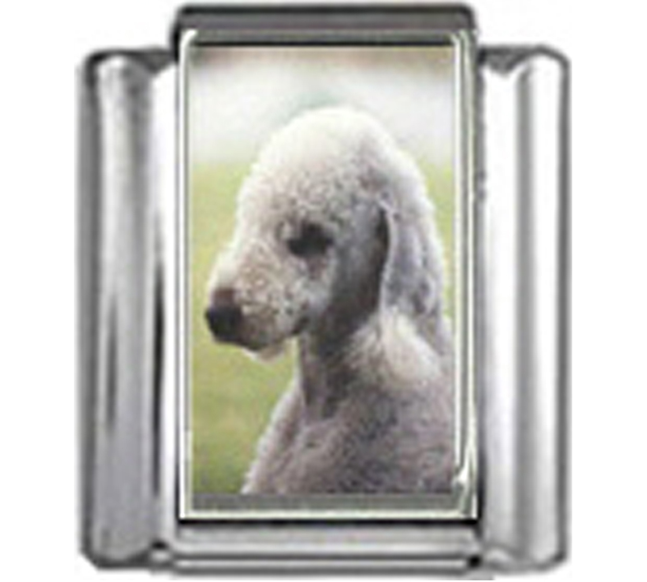 DG066-Bedlington-Terrier-Dog-4