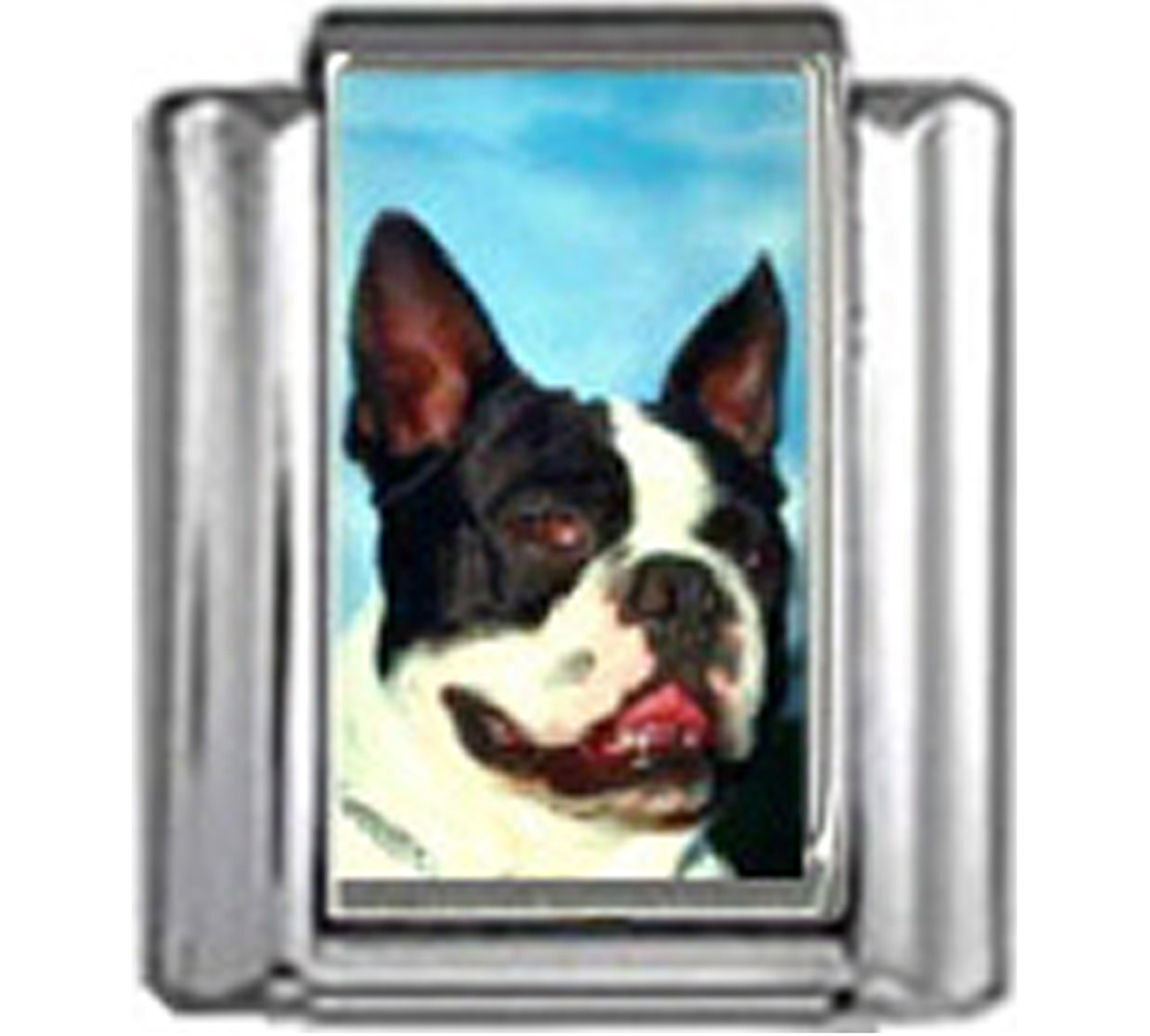 DG095-Boston-Terrier-Dog-5