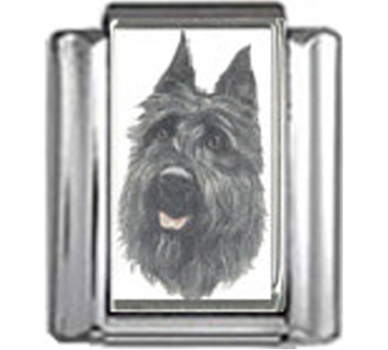 DG098-Bouvier-des-Flandres-Dog-3