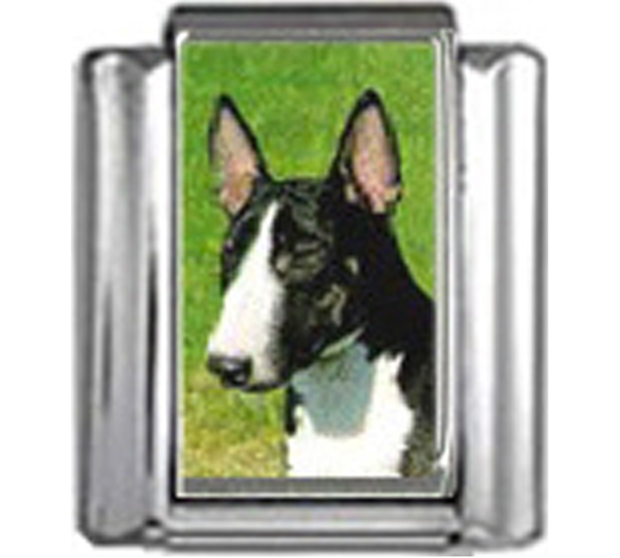 DG117-Bull-Terrier-Dog-4