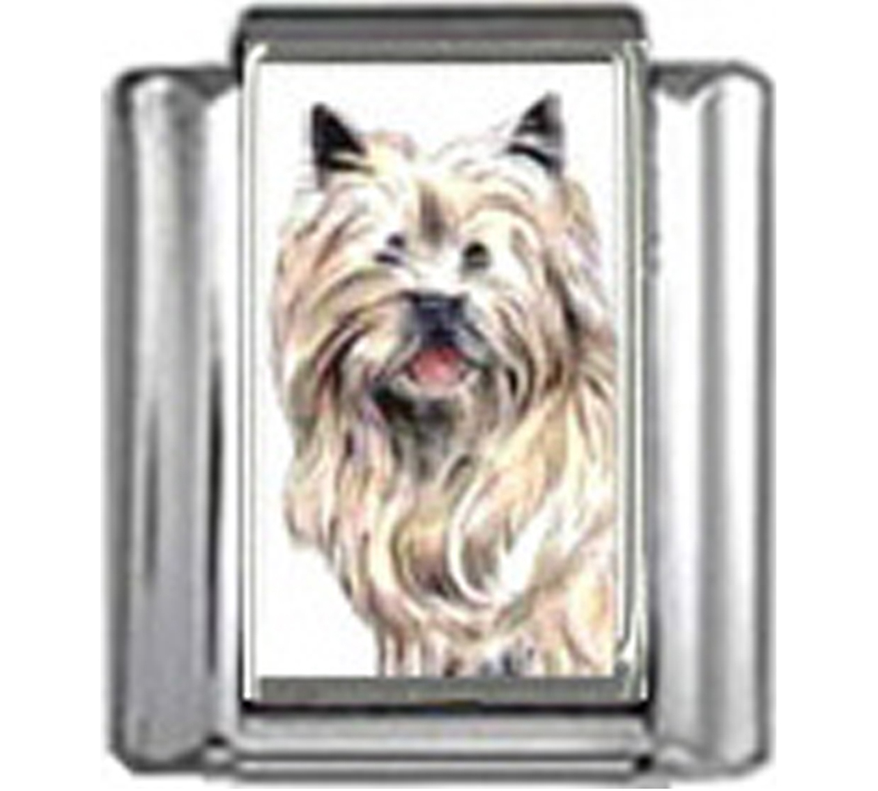 DG131-Cairn-Terrier-Dog-3