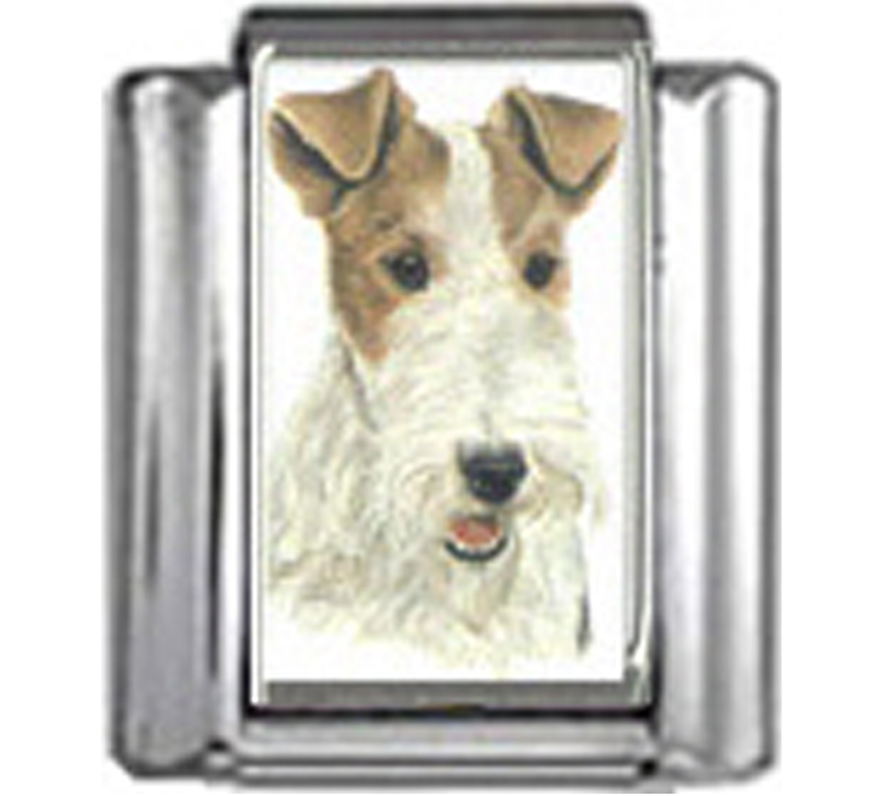 DG198-Fox-Terrier-Dog-2