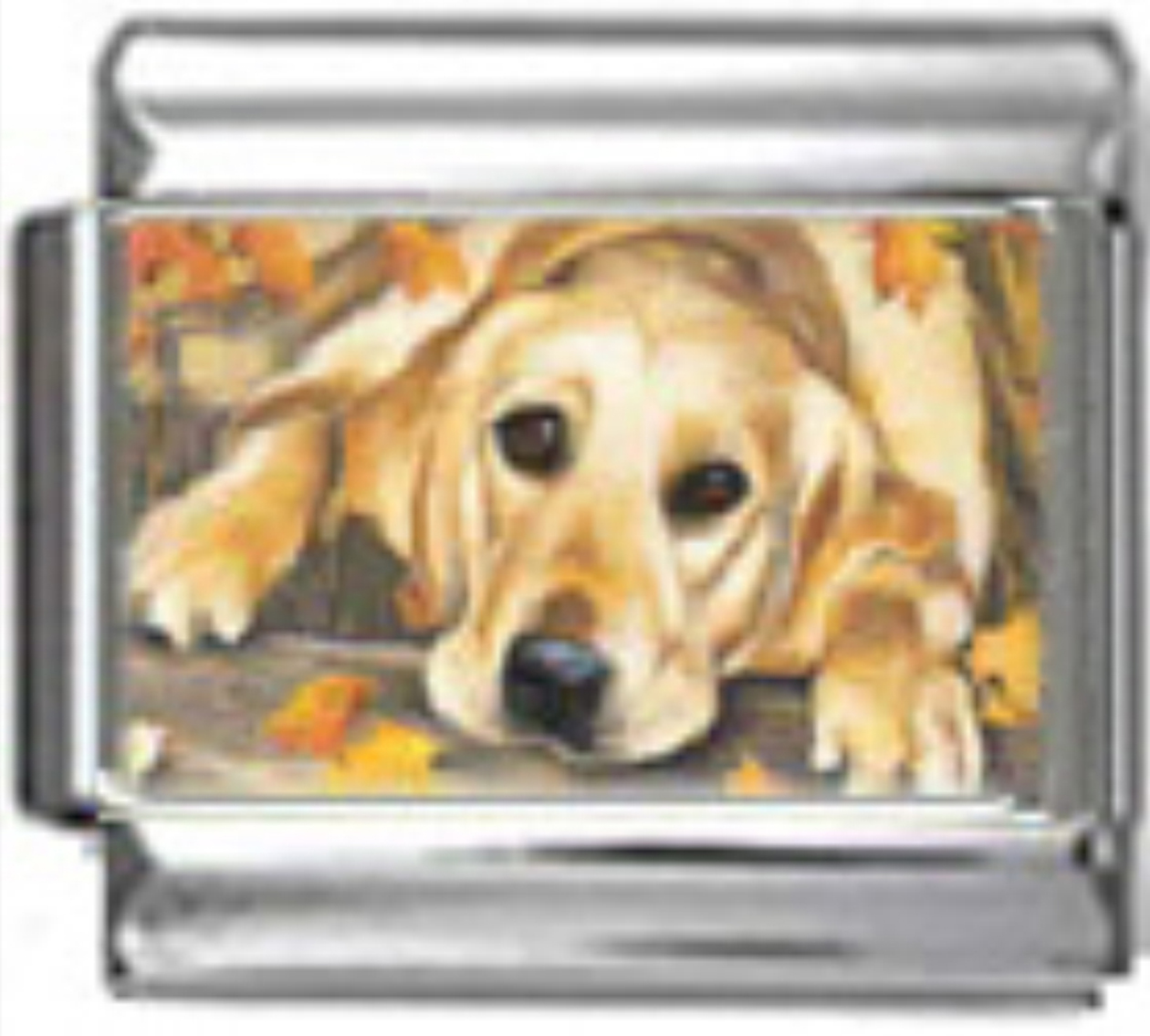 DG214-Golden-Retriever-Dog-1