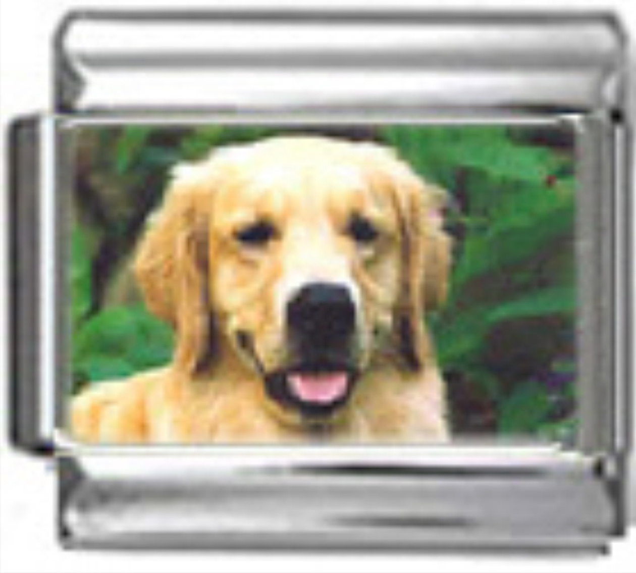 DG217-Golden-Retriever-Dog-4