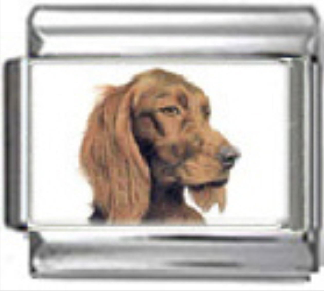 DG238-Irish-Setter-Dog-2