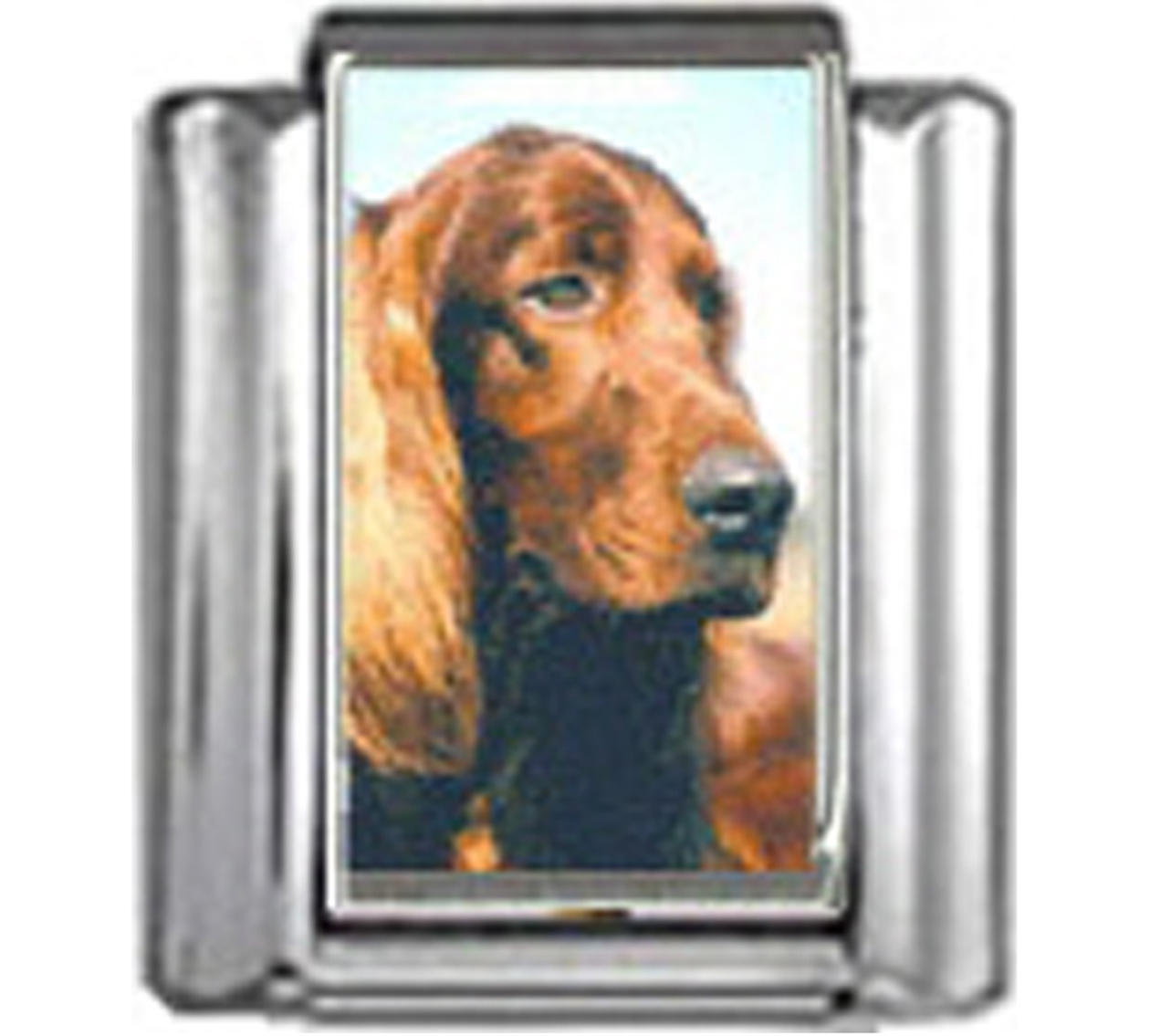 DG240-Irish-Setter-Dog-4