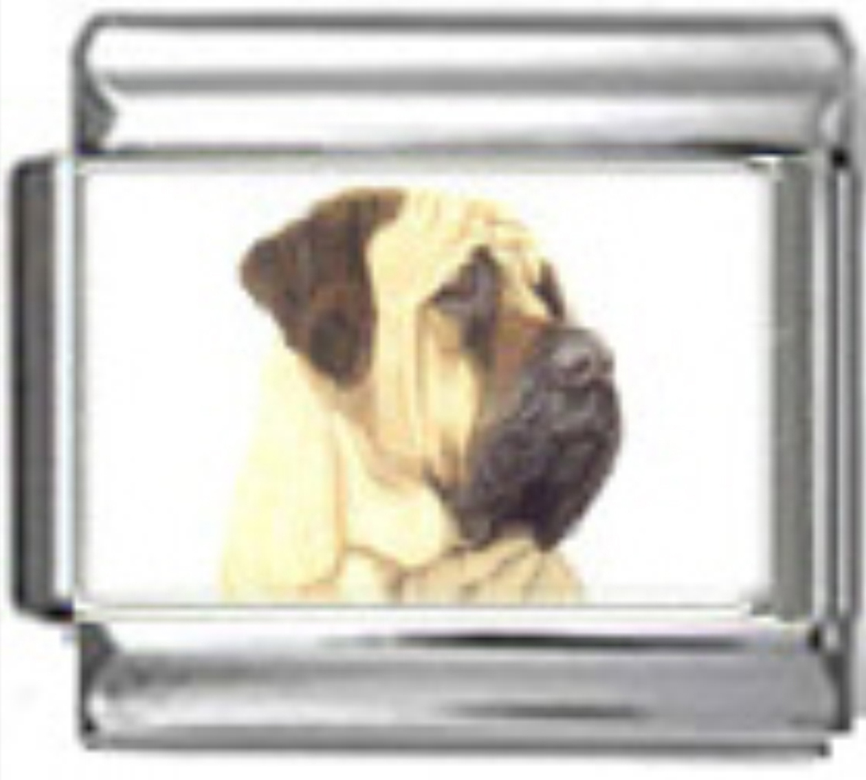 DG277-Mastiff-Dog-2