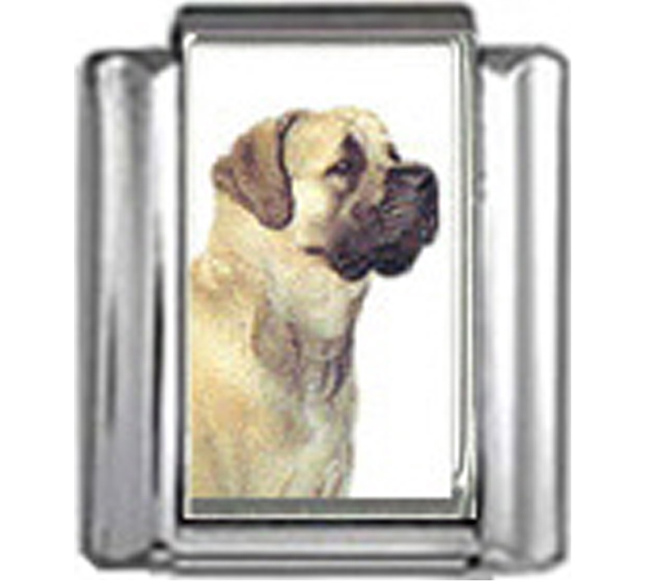 DG279-Mastiff-Dog-4