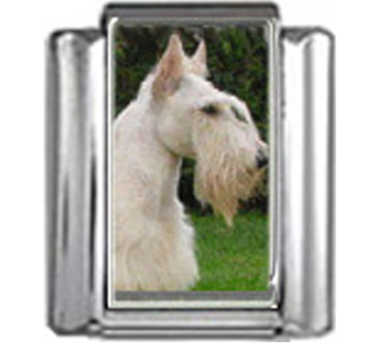 DG352-Scottish-Terrier-Dog-4