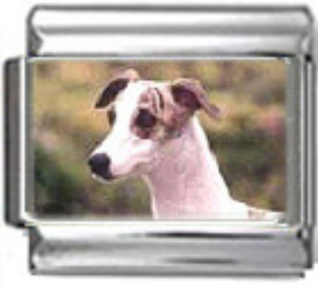 DG404-Whippet-Dog-4