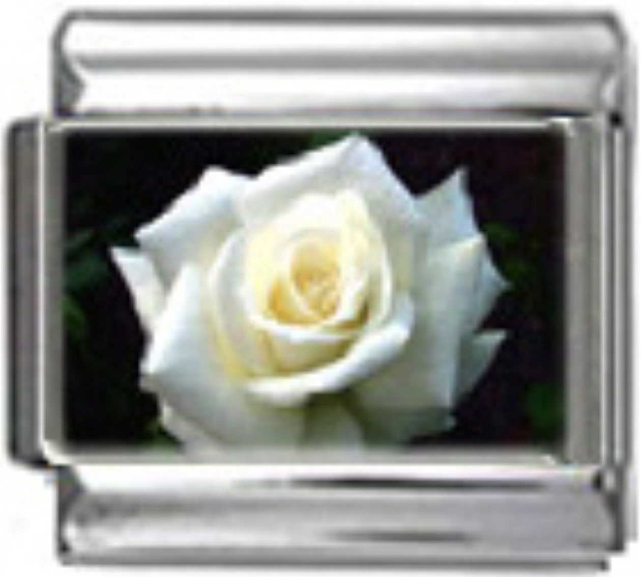 GA006-Rose-White-Photo